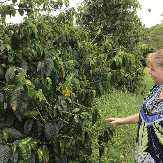 byron aromas coffee plantation northern rivers food tours 001
