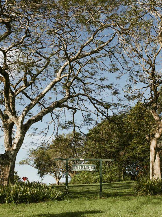 tullamoor macadamia nuts byron bay foodie0018